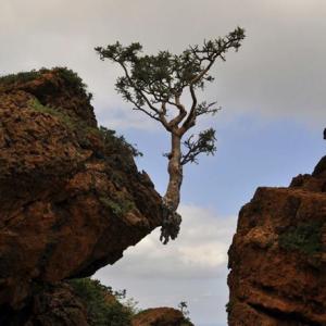 boom op rand van afgrond